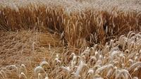 Dsc 0035 crop