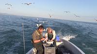 Fischer und m%c3%b6ven