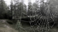Rg spinnennetz