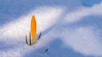 Spring awakening 3132112 1920