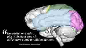 """Man sieht ein Gehirn als graue Illustration dargestellt vor schwarzen Hintergrund. Bestimmte Bereiche des Gehirns sind farbig markiert. Links unten steht als Zitat von Niels Birbaumer, Neurobiologe: """"Nervenzellen sind so plastisch, dass sie sich auf andere Sinne umbilden können."""""""