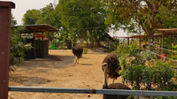 Z   zoo in laos edited