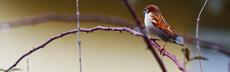 Vogelbild