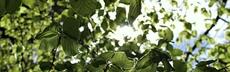 Kap1 seite2 bild buchenblaetterdach rebeccazeller