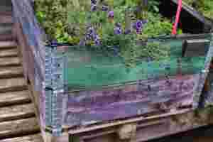 Zu sehen ist ein Beet mit Lavendel.