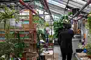 Zu sehen ist Christoph Pelka mit einer Grünpflanze in der Hand, die er durch das Gewächshaus trägt.