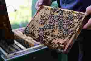 Zu sehen ist Imker Bernd Möller bei der Arbeit mit seinen Bienen.