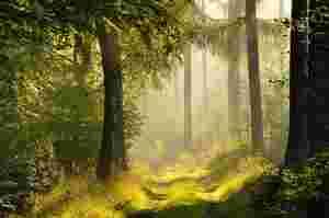 Zu sehen ist ein Waldweg im Naturpark Schönbuch.