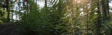 Kap5 seite57 bild waldbaden6 rebeccazeller