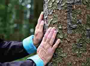Zu sehen ist Gisela Steuber beim Waldbaden.