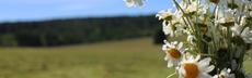 Kap6 seite1 bild dankeblumen rebeccazeller
